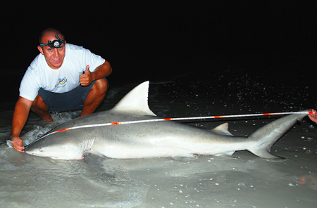 6 foot Bull Shark Caught in April 2008