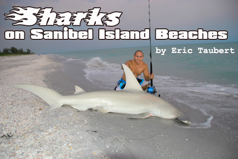 Sharks on Sanibel Island
