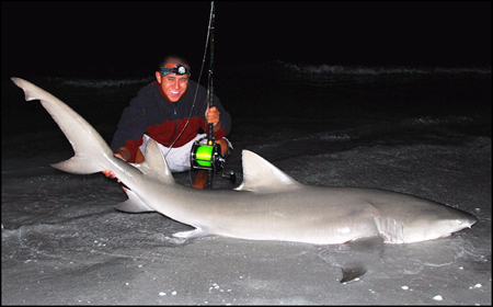 8 Foot 3 Inch Lemon Shark - March 2008